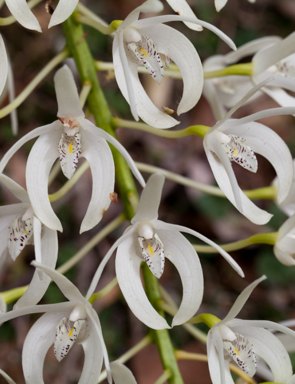 Close up view of a rock lily